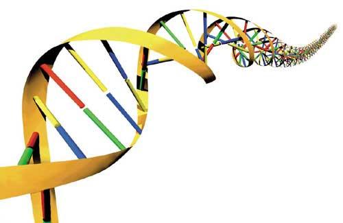 Hur semikolonbehärskargenen ser ut vet ingen. Så här ska man visst se ut om man har anlag för fetma.